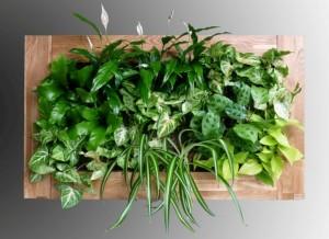 Gardners.cz - obrazy z rostlin na zakazku (5)